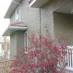Stucco Painting Gallery Photo 20
